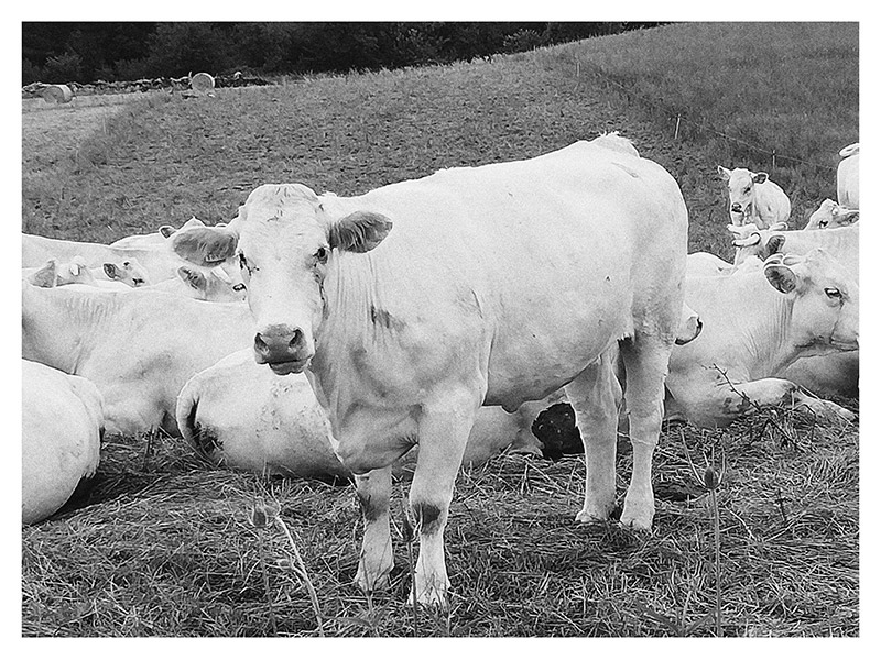Photo de la gamme Le Label rouge charolais