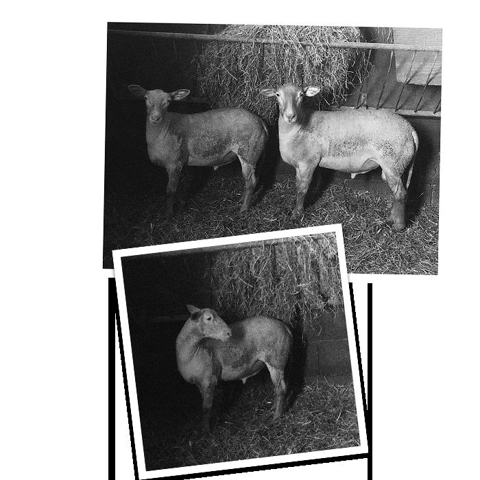 Photo de la gamme L'agneau du Pays